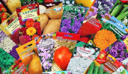 Срок и условия хранения семян